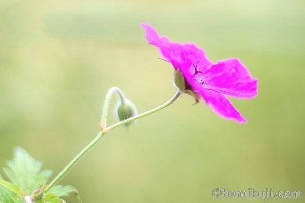 ヒプノセラピー体験談(入口に咲くピンクの花のイメージ)