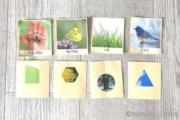 幼児ポピー「ももちゃん」2歳カード